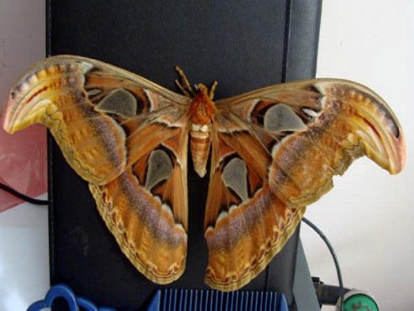 Bướm bay vào nhà - Giải mã điềm báo bướm bay vào nhà có ý nghĩa gì