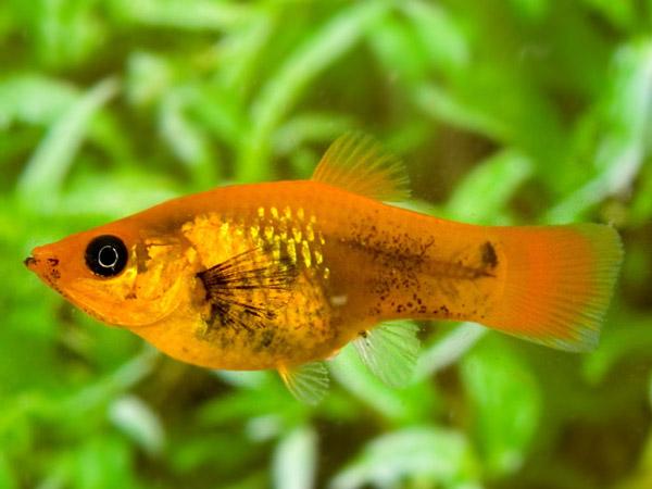 Mơ thấy cá - Điềm báo và con số may mắn của giấc mơ thấy cá