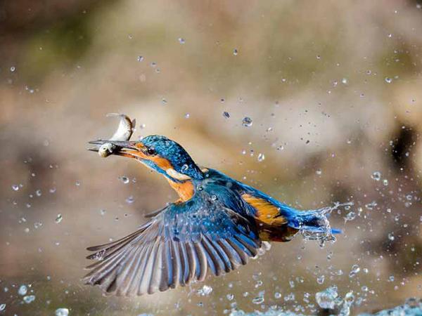 Chim sa cá nhảy là gì - Điềm báo và cách hóa giải chim sa cá nhảy