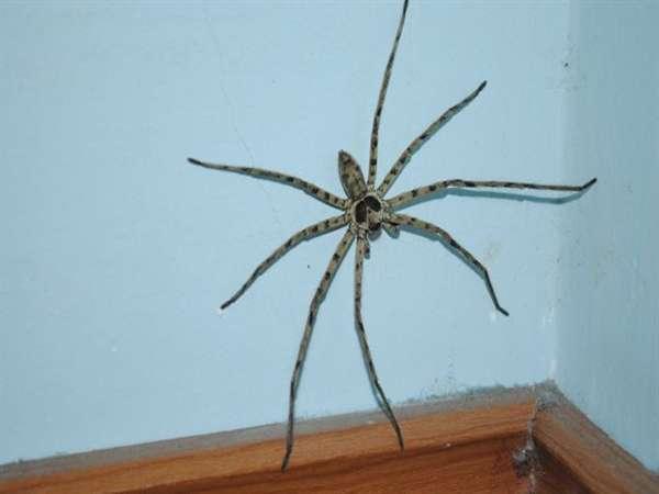 Gặp nhện là điềm báo gì - Gặp nhện nên đánh số đề nào?