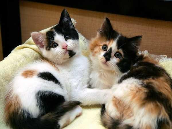 Điềm báo thấy mèo vào nhà đánh số mấy?